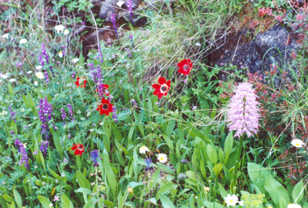 Wild flowers on walking vacations